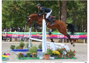 Prestation remarquée de l'étalon GROOVY SEMILLY (Diamant de Semilly x Heartbreaker) dans les cycles classiques 5 ans d'Auvers / Remarquable clear round for the SF stallion GROOVY SEMILLY in this 5YO class